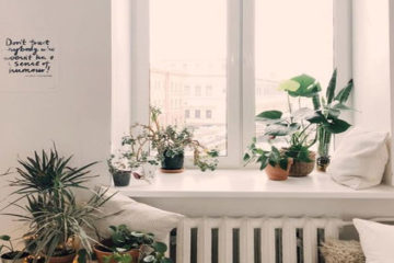 Succulents and aloe vera potted plants on a sunny window ledge